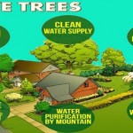 Important Information About Trees